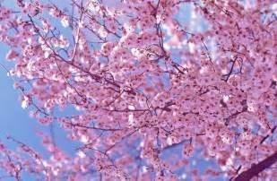 Antebellum Trail & Cherry Blossom
