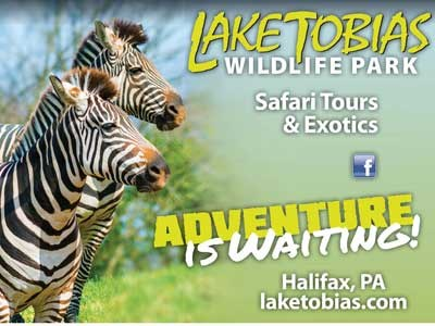 Fun with the Amazing Animals at Lake Tobias Wild