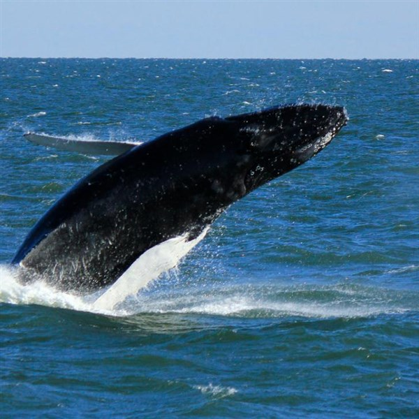 Whales, Wildlife & Lighthouse